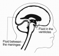 Brain-diagram-2.png